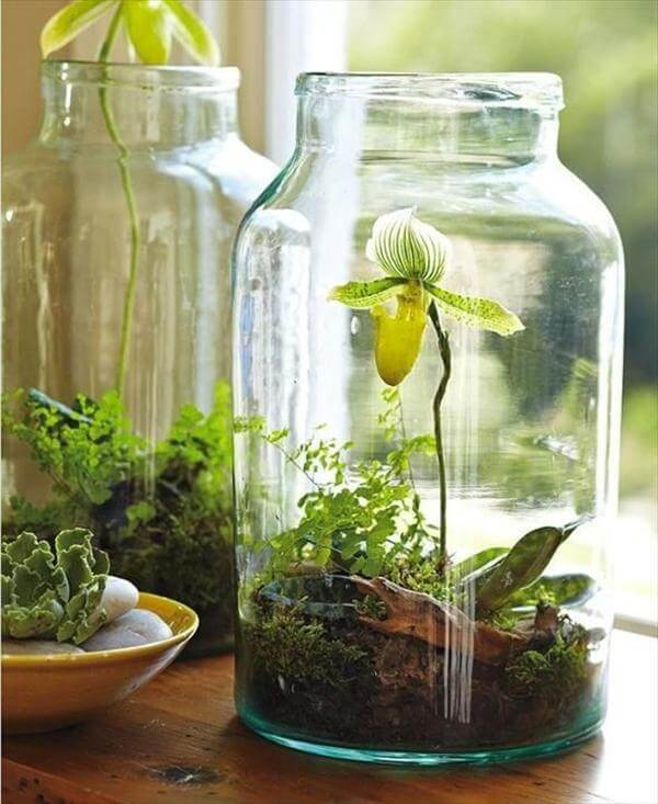 diy mason jar garden project