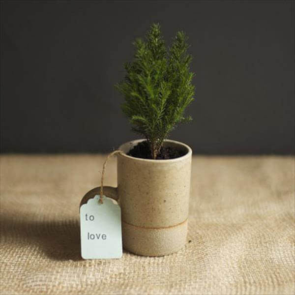 cypress planter cup gift