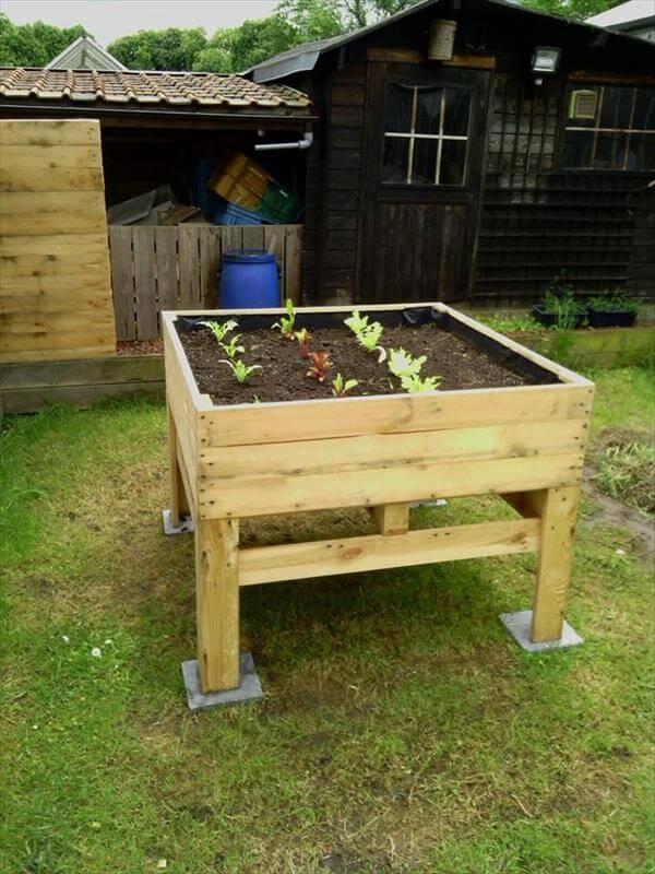 pallet wooden vegetable garden